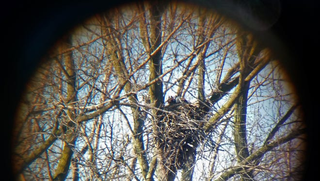 A nesting eagle has been found in Kenosha County, a first in a least 45 years.