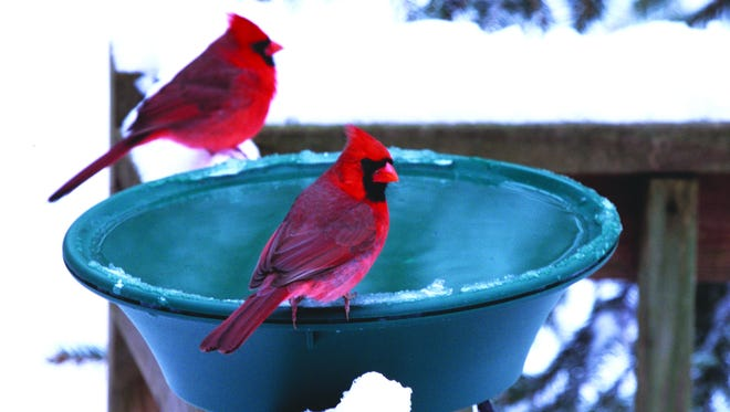 Birds will flock to a heated bird bath to hydrate and to bathe. Clean feathers insulate birds from the cold.