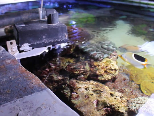 Equipment pumps water into one of the National Aquarium's many fish tanks. Before entering the tank, water passes through a three-tiered filtration system.