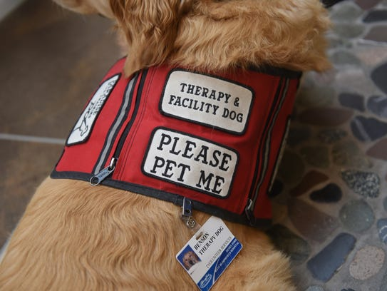 Therapy dog Benson has his own badge and vest.