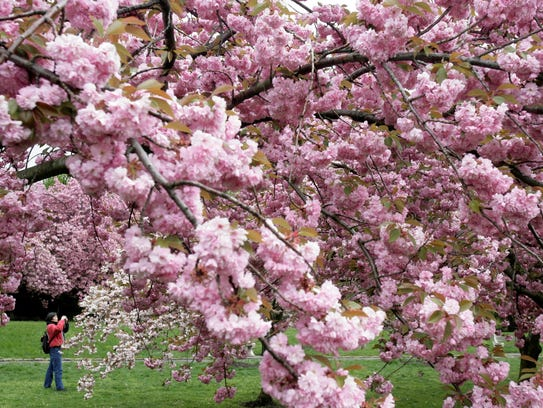 The Brooklyn Botanic Garden will celebrate its collection
