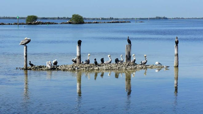 Sea Birds relax at Pineland Marina, home to Island Girl Charters.