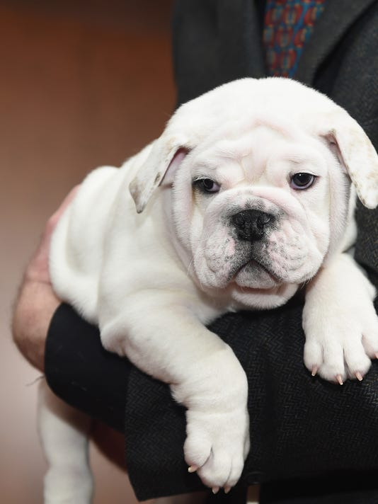 American Kennel Club Reveals Top Breeds Of 2014