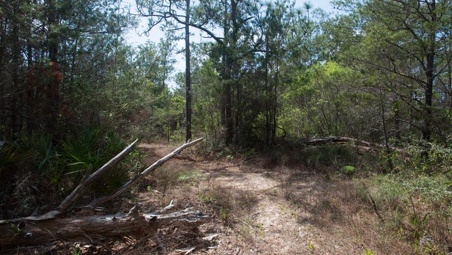 A new school could be constructed on this land in the Holley area of south Santa Rosa County, pictured on March 28, 2017, after Santa Rosa County voters in March approved a continuation of a half-cent sales tax.