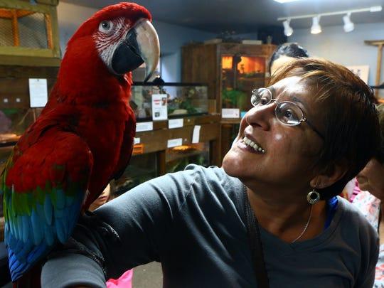 Nancy Adamez talks to Zazu, a green wing macaw, during