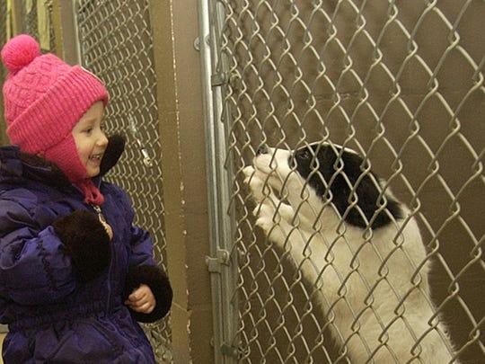 Photo 1 -- stray pets