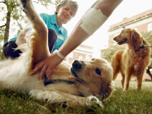 Dog being pet