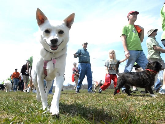 Run for Paws 2013.jpg
