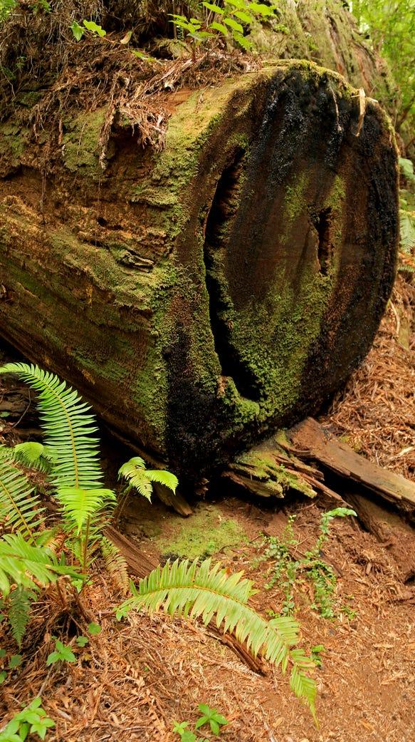 Even fallen trees display exquisite beauty in Northern