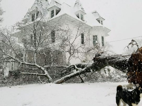 A large oak tree fell at the corner of Altamont Place