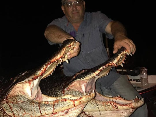 Stan Stammey, of Georgia, was able to harvest two 10-foot alligators last week with Rob Ward, of S & K Fisheries and Guide Service in Fort Pierce, from Blue Cypress Lake in western Indian River County.