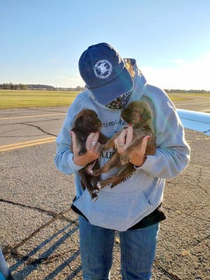 Two of Roxanne's pup arrived at Branch County Memorial Airport