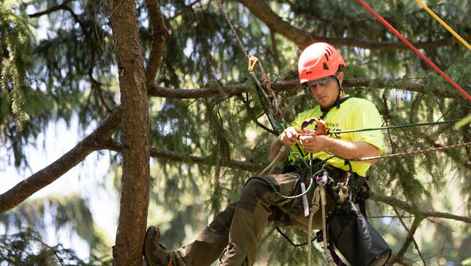 Casey Johnson, Nashville, Tenn., helps his team during JAMBO, a competition for the arborist community taking place at Holliday Park over the weekend, Indianapolis, Friday, July 13, 2018. The contest, with awards for teams and individuals, has drawn men and women from all over the fifty states and Canada, plus Sweden and Puerto Rico.