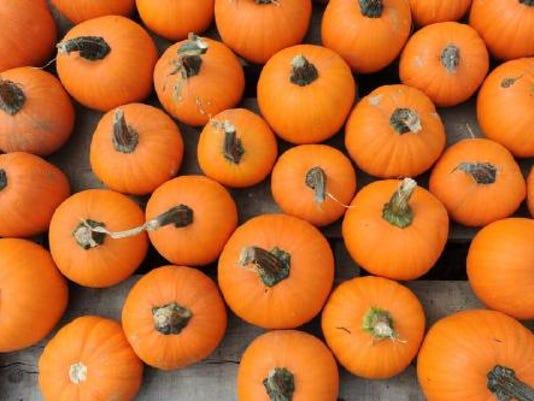 635792172669868636-IMG-Pumpkins-000.JPG-1-1-TJ59UJPL-display-1-