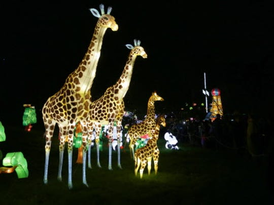 Giraffes are lit up at China Lights at the Boerner Botanical Gardens in Whitnall Park.