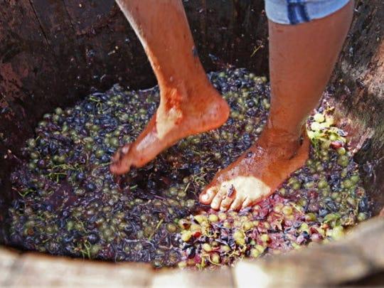 Photographs from Cedar Creek Settlement's Wine & Harvest Festival