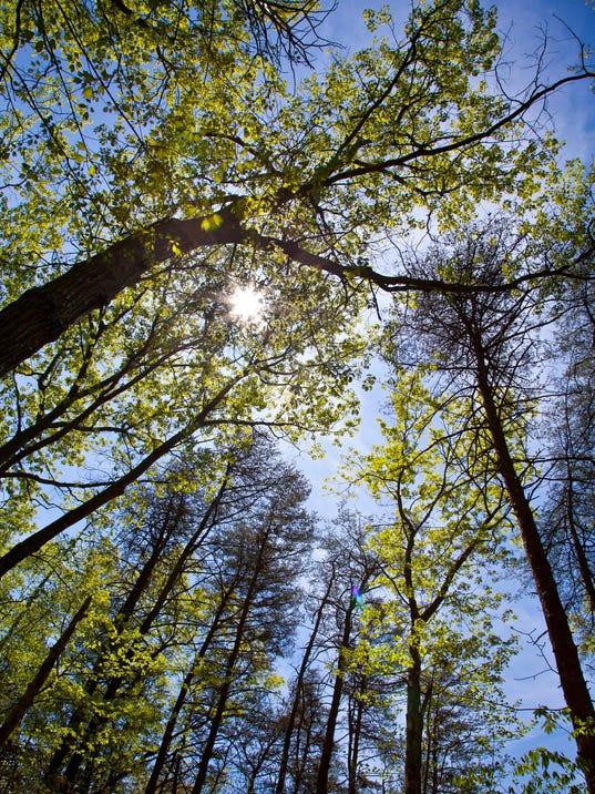 636513022092719520-Arbor-Day.jpg