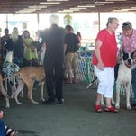 More than 700 dogs participated Sunday morning in the Berrien Kennel Club's 77th All-Breed Dog Show at Calhoun County Fairgrounds in Marshall.