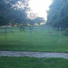 Homeowners in Avon Lake, OH may get permission to use paintball guns to scare off deer