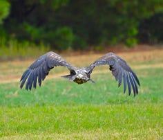 Photos: Watching Hope take flight