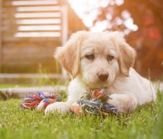Pet Peeves: Mouthing puppies