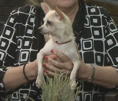 Watch Interview: Polly looking for forever home