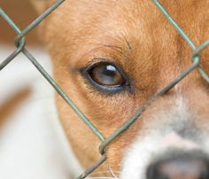 Dog behind wire mesh - generic image