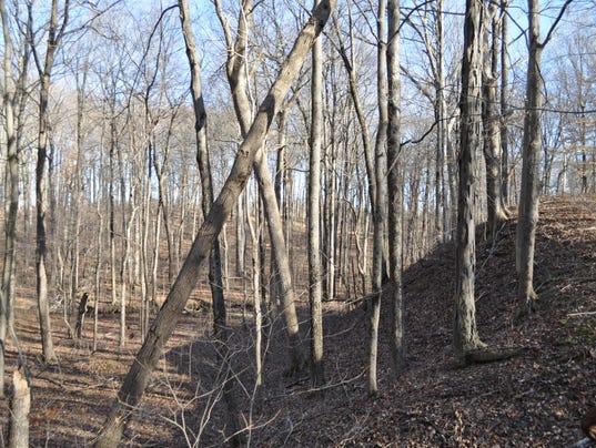 635877050934524781-New-nature-preserve-slope.jpeg