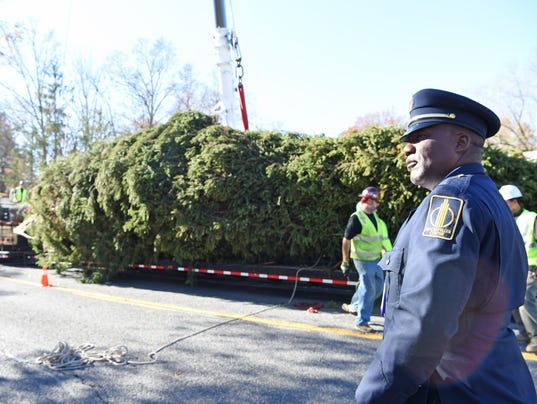 VIDEO: Rockefeller Center Tree Grew Roots In Gardiner