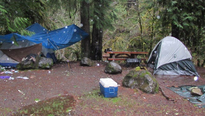 This is a 'before' shot of one of the campsites in the Cottage Grove Ranger District.