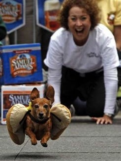 Greta was a regular in the wiener dog races. The races will be held Saturday, April 1 at Turfway Park.