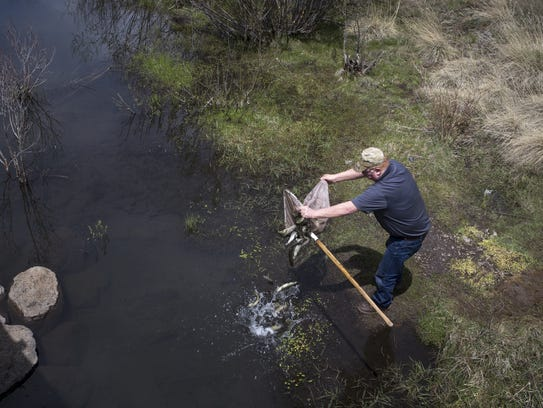 Ken McGown, manager at the Silver Creek Fish Hatchery,
