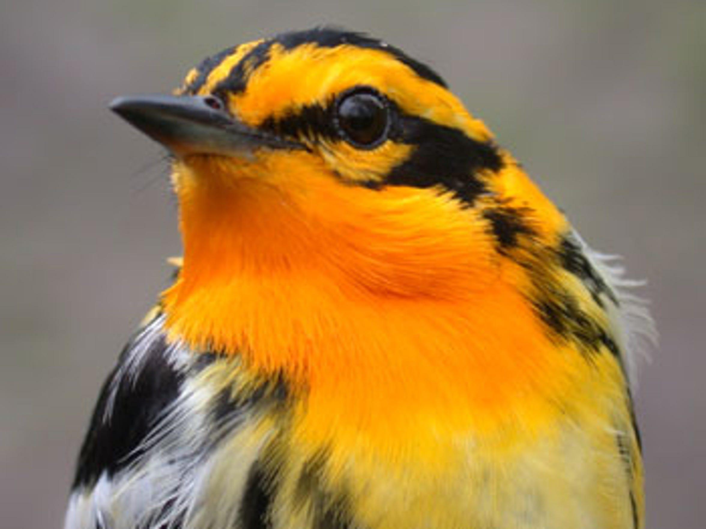 Braddock Bay Bird Observatory is an internationally recognized bird banding research organization.