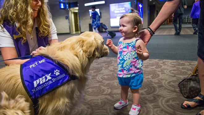 A new program, Navigator Buddies, was announced Friday morning, September 1, 2017, at Sky Harbor International Airport in Phoenix.  Passengers and visitors to the airport will have the opportunity to pet and interact with therapy dogs while waiting to catch a flight or picking up a passenger.  Annette Flegenheimer,Chandler, left, holds onto her dog, Carter as Lily Britt, 1, Glendale, carefully approaches the golden retriever.