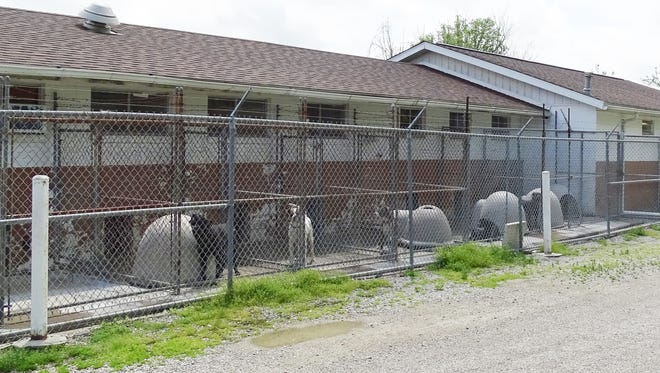 The Muskingum County Dog Pound is quarantined after a stray was confirmed to have distemper.