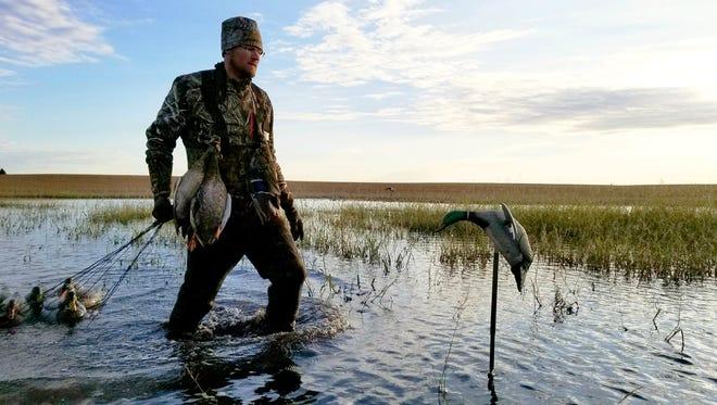 Jesse Wiant takes down decoys in a flooded soybean field.