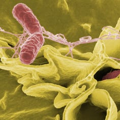 Walmart, H-E-B, Food Lion Swiss rolls recalled over salmonella concerns