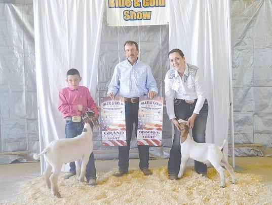 Champion goats