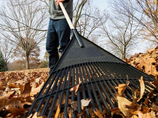 It's leaf-raking season.