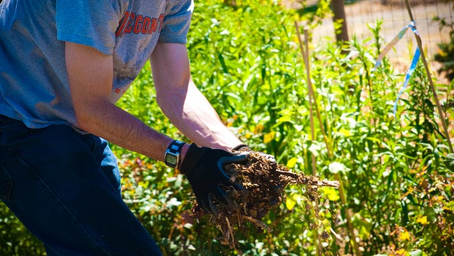 Mulching tender perennials can help protect them during a cold snap.