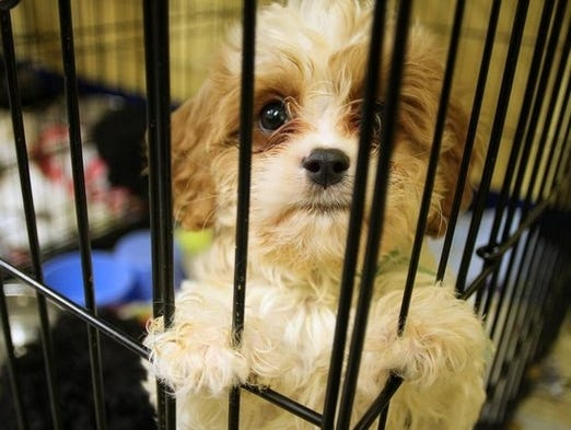 The Licking County (Ohio) Humane Society took in nearly 60 dogs rescued from breeders who had them all packed into one minivan in transport from Indiana.