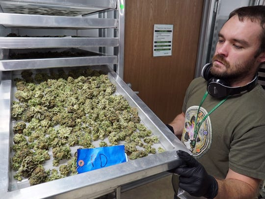 Eric Benevento of Medicine Man marijuana dispensary in Denver shows off a tray of drying marijuana inside the store's production facility. Marijuana stores need access to capital to buy equipment, pay rent and employees and prepare for legal sales before they can turn a profit.