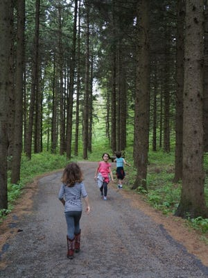 The paved trail through the woods makes a relatively easy hike, even during the summer months.