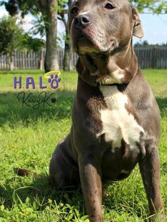 0711-ynir-halo-wade.jpg