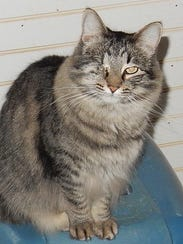 Phoebe is a 4-year-old female cat with one eye. Rescuers