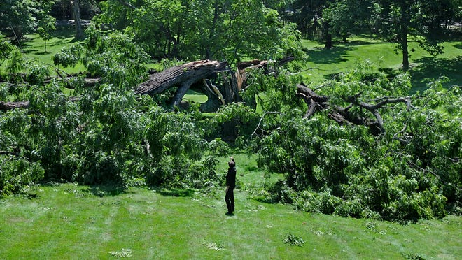 """This 200-year-old tree on the front lawn of the historic Schuyler House in Rhinebeck, destroyed in a storm on July 23, was known as the state's """"champion"""" black walnut tree."""