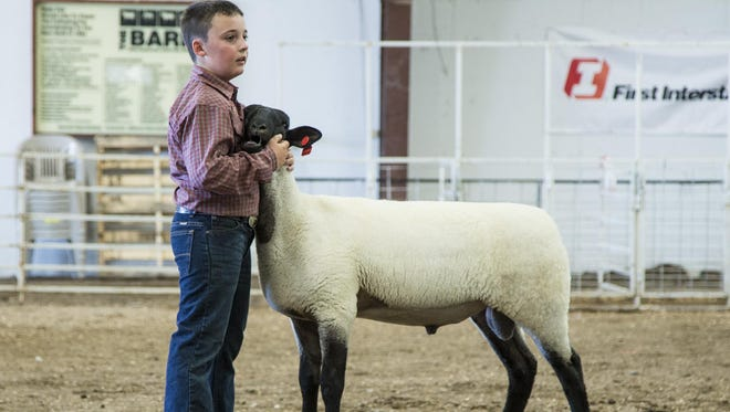 Branden Wiren, 10, of Corvallis, shows a ram in the Livestock Pavilion during the Montana State Fair Open Sheep Show. Branden won five ribbons during Saturday's event.