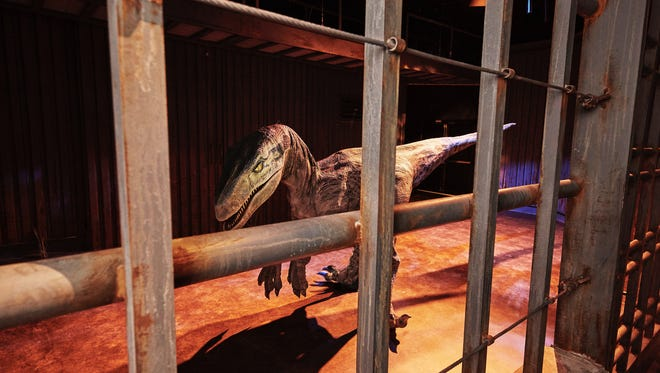 A Velociraptor walks into the Training Paddocks at 'Jurassic World: The Exhibition,' which premieres Nov. 25 at the Franklin Institute in Philadelphia.