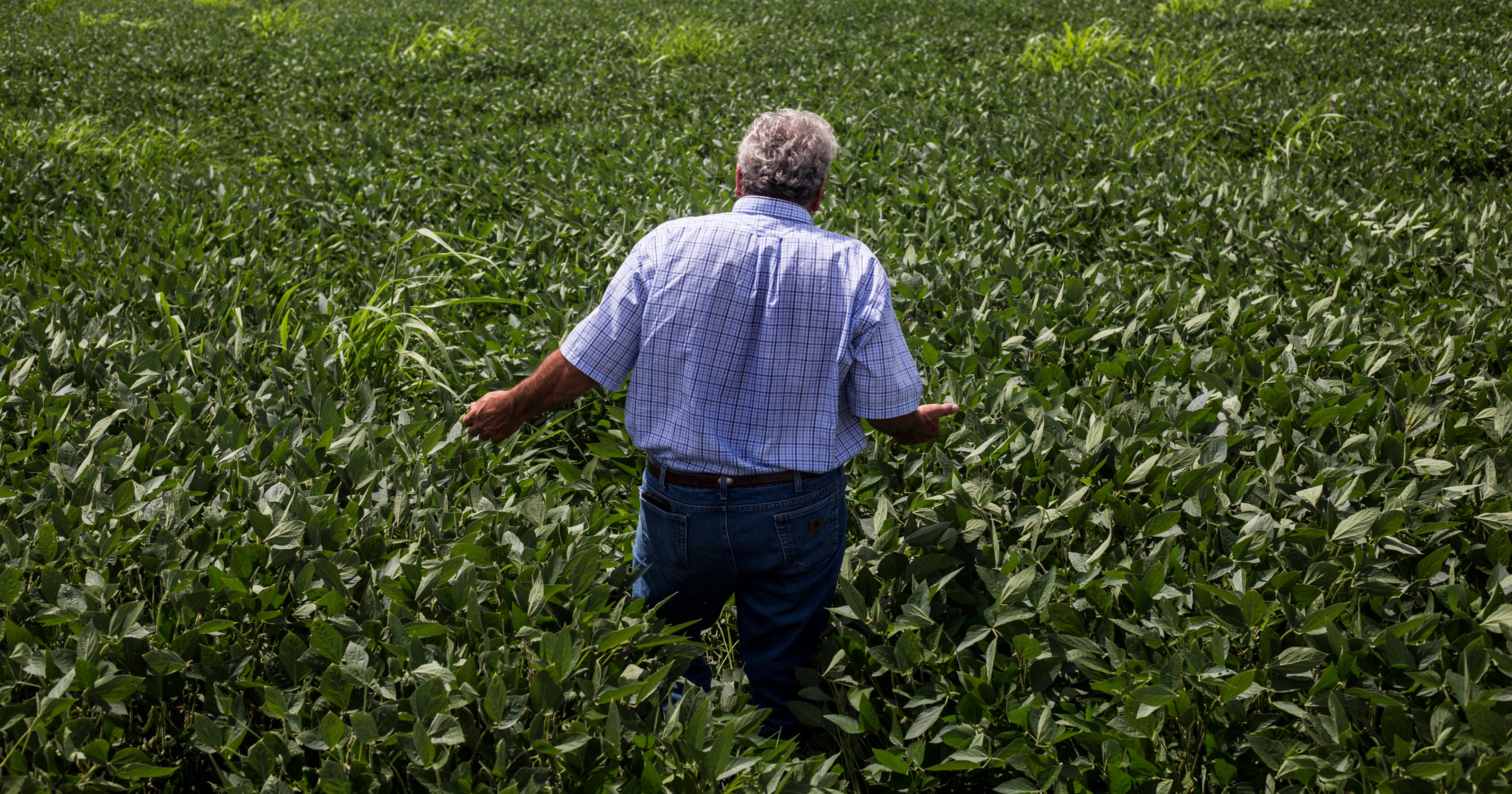 Farmers sue Monsanto, other producers over drifting herbicide