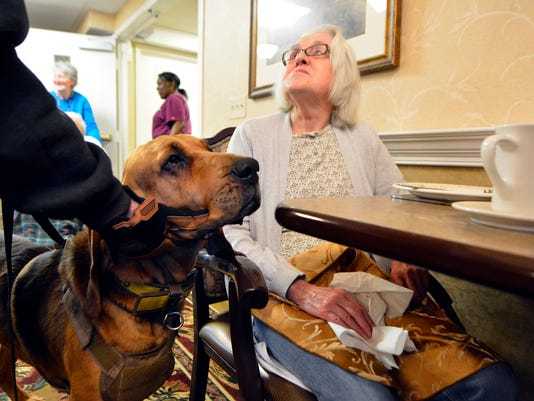 Bloodhounds practice at local elderly care facility
